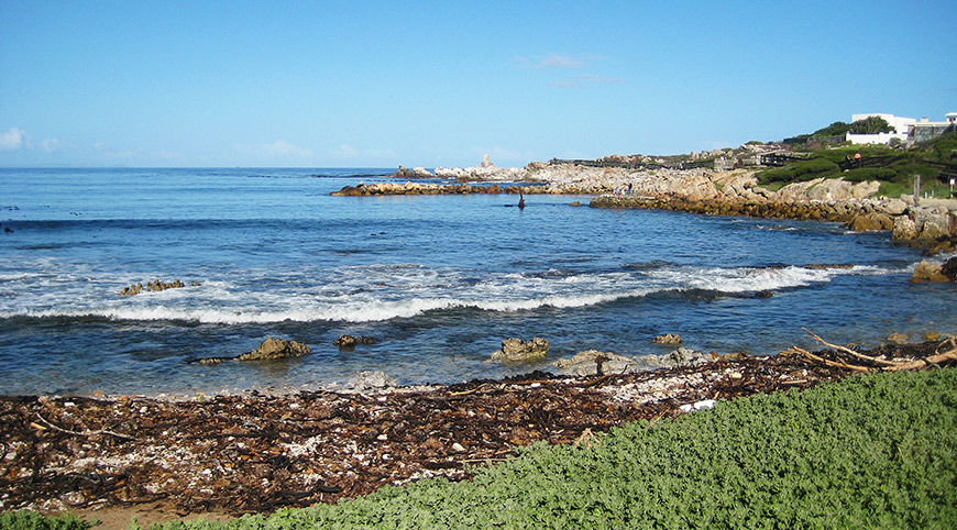 The Penguin Colony at Stony Point, Bettys Bay