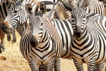 Big 5 Safari Tour Cape Town