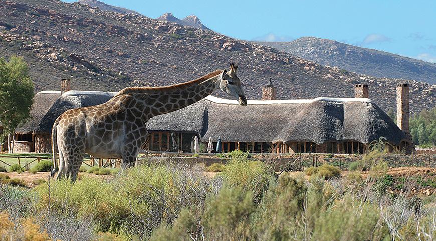 Giraffe-&-restaurant