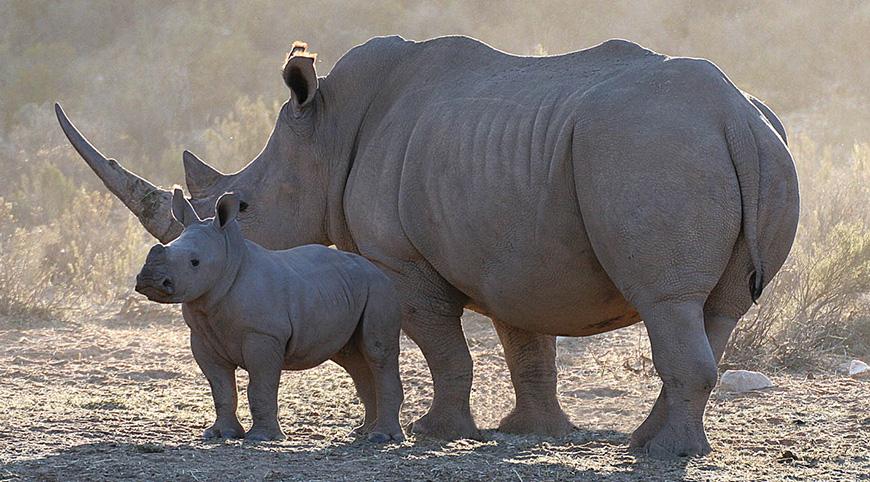 Rhino&baby_02